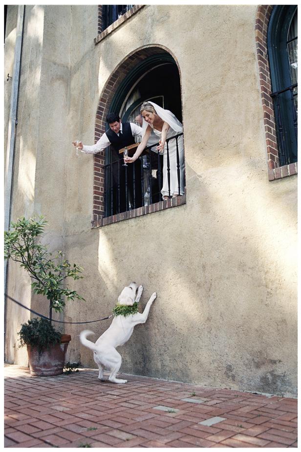 Cute wedding dogs