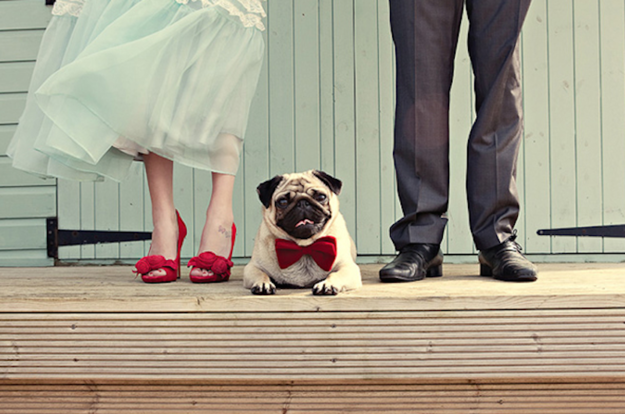 Dog for Mr. & Ms. Dog