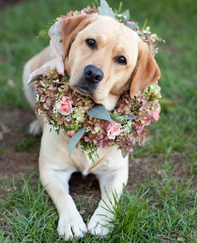 a-flower-wreath-for-your-wedding-dog