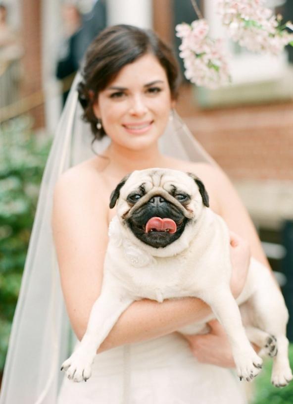 wedding dogs- 123weddingcards