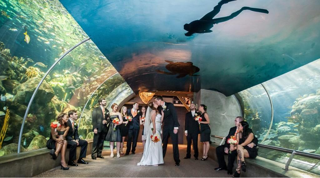 Florida Aquarium Wedding - 123WeddingCards