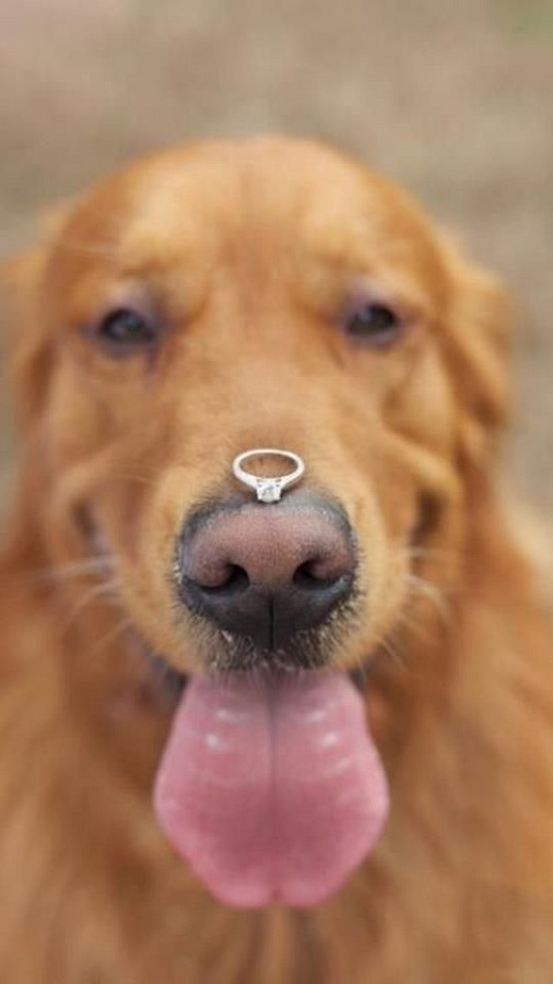 Include your pet in the proposal - 123WeddingCards